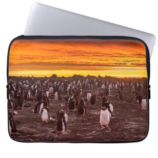 Housse Pour Ordinateur Portable Colonie de pingouin au coucher du soleil, les