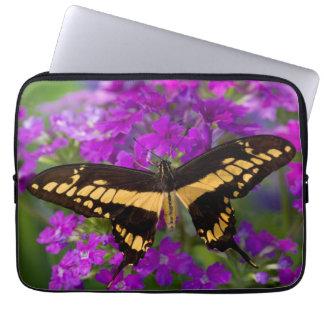 Housse Pour Ordinateur Portable Dessus d'un papillon de machaon