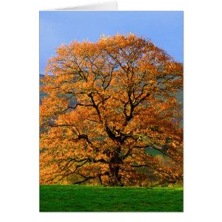 Howgillhounds carde la couleur d'automne cartes de vœux