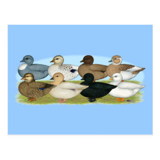 Huit canards d'appel carte postale