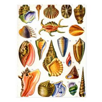 Huîtres - Carte postale
