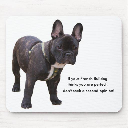 Blog de gagaanimaux  Chat , bouledogue francais, pigeon,souris, hamster,