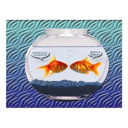 Humour de bocal poissons de poisson rouge carte postale for Bocal a poisson rouge pas cher