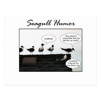 Humour de mouette carte postale