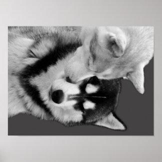 Husky Love Posters