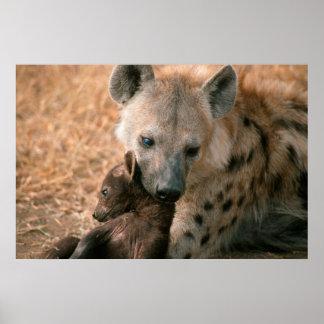 Hyène repérée (Crocuta de Crocuta) avec le chiot Poster