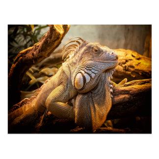 Iguane de dragon cartes postales