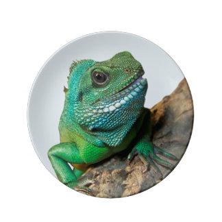 Iguane vert assiette en porcelaine
