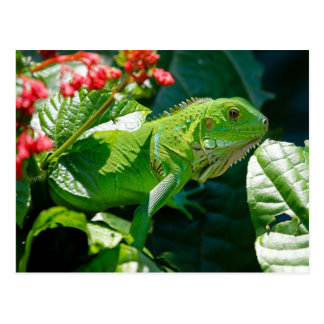 Iguane vert carte postale