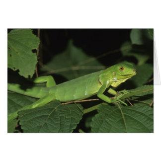 Iguane vert, (iguane d'iguane), iguanes communs carte de vœux