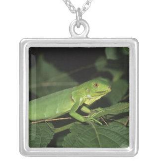 Iguane vert, (iguane d'iguane), iguanes communs pendentif carré