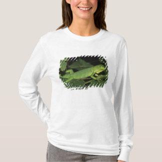 Iguane vert, (iguane d'iguane), iguanes communs t-shirt