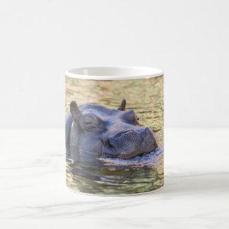 il y a un hippopotame sur ma tasse !