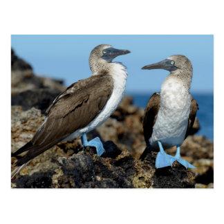 Îles de Galapagos, île d'Isabela Cartes Postales