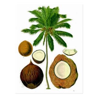 Illustration botanique d'arbre de noix de coco carte postale