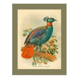 Illustration colorée de faisan d'oiseaux vintages carte postale