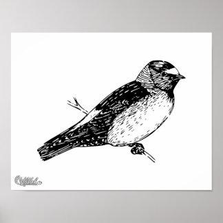 Illustration d oiseau d hirondelle de falaise