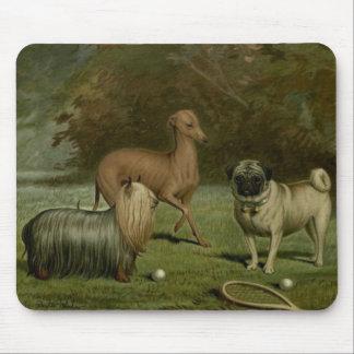 Illustration de 1800s d'amis de carlin de lévrier tapis de souris