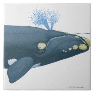 Illustration de baleine droite de North Pacific Grand Carreau Carré