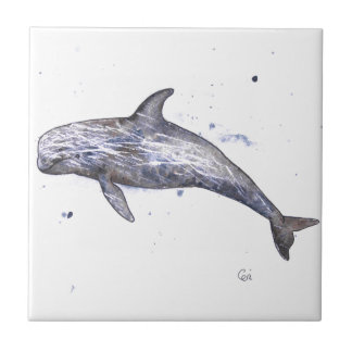 Illustration de dauphin de Risso Petit Carreau Carré