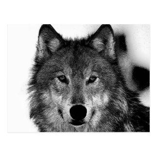 Illustration de loup noir et blanc carte postale