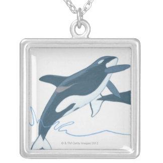 Illustration des épaulards (orque d'Orcinus) Collier