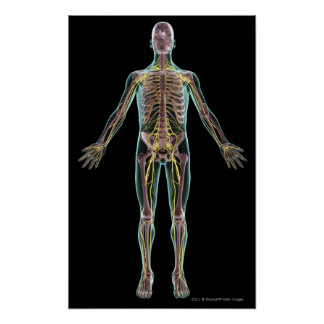 Illustration du système nerveux posters