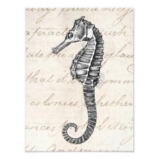 Illustration hawaïenne d'hippocampe de 1800s vinta photo d'art