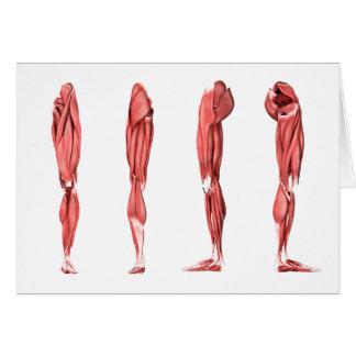 Illustration médicale des muscles humains de jambe cartes