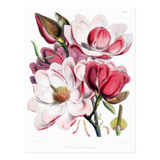 Illustration rose vintage de botanique de fleur de carte postale