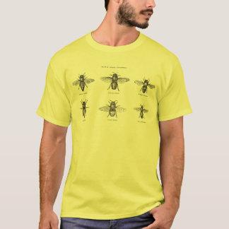 Illustration scientifique d'abeilles de miel t-shirt