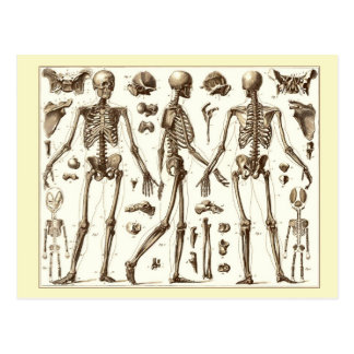 Illustration scientifique du squelette humain cartes postales