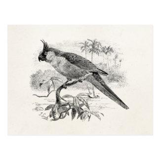 Illustration tropicale d'oiseau de perruche cartes postales