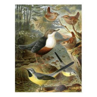 Illustration vintage colorée de carte d'oiseaux