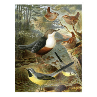 Illustration vintage colorée de carte d'oiseaux cartes postales
