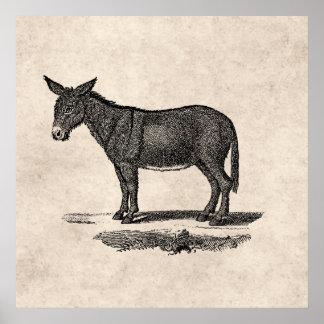 Illustration vintage d'âne - ânes 1800's poster