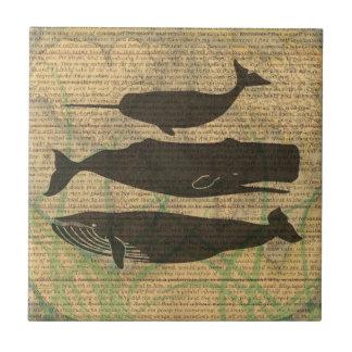 Illustration vintage de baleine antique rustique petit carreau carré