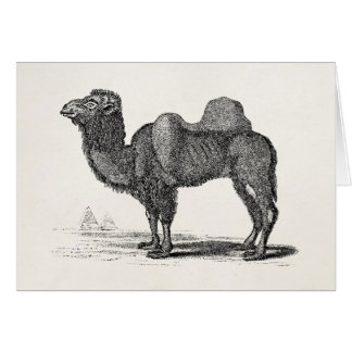 Illustration vintage de chameau de 1800s - cartes