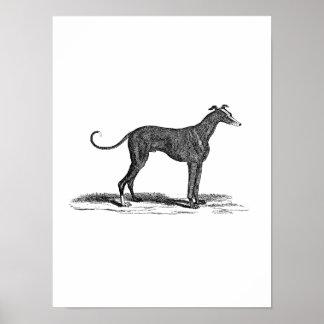 Illustration vintage de chien de lévrier de 1800s  poster
