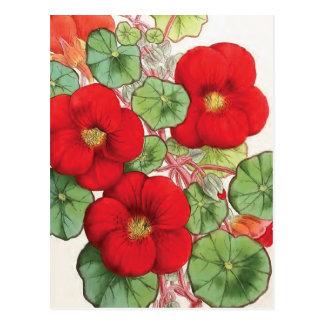"Illustration vintage de fleur de ""nasturce"" carte postale"