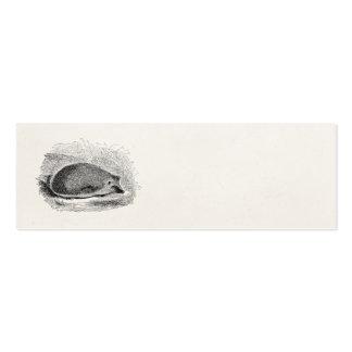 Illustration vintage de hérissons de 1800s de héri carte de visite petit format