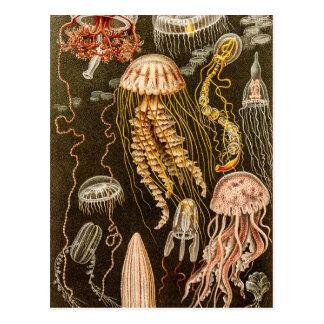 Illustration vintage de méduses d'antiquité de carte postale