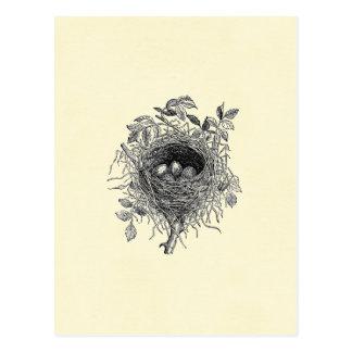 Illustration vintage de nid d'oiseau cartes postales