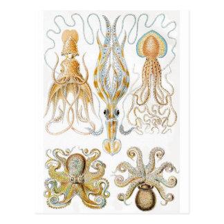 Illustration vintage de poulpe carte postale