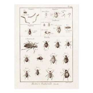 Illustration vintage de scarabées d'insecte carte postale