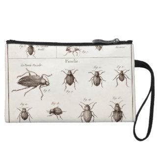 Illustration vintage de scarabées d'insectes anse