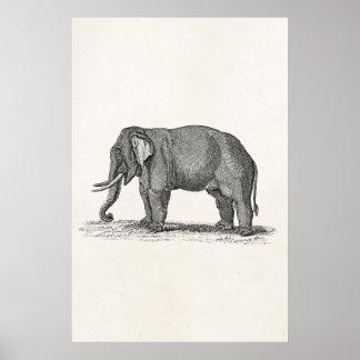 Illustration vintage d'éléphant de 1800s - éléphan poster