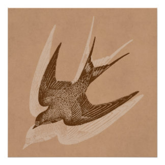 Illustration vintage d'hirondelle - oiseau 1800's  affiches