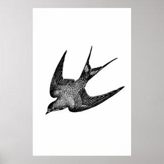 Illustration vintage d'hirondelle - oiseau 1800's  affiche