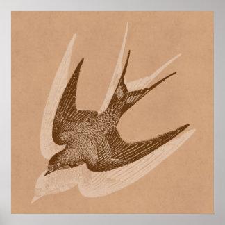 Illustration vintage d'hirondelle - oiseau 1800's  poster